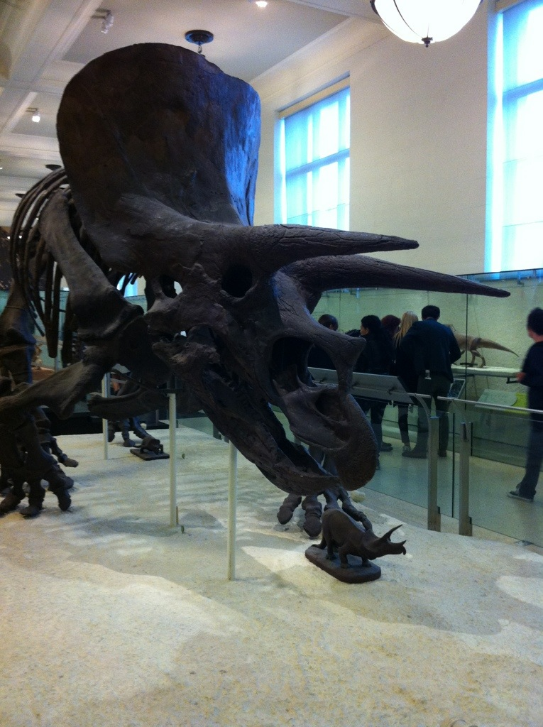 NYC Day 2: AMNH [the pig & quill]